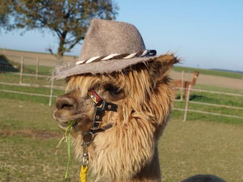 Alpaka Susi mit Hut